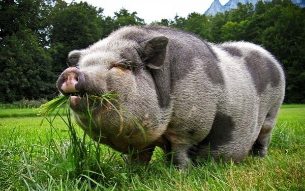 7000 Gambar Binatang Yang Halal Dimakan HD Terbaik