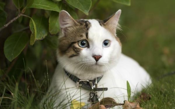 2 Penyakit Kucing Ini Boleh Membunuh Manusia Iluminasi
