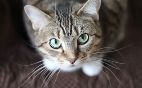 Punca Punca Bulu Kucing Anda Gugur Iluminasi