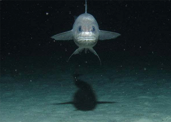 10 makhluk dasar laut yang sangat pelik dan dahsyat