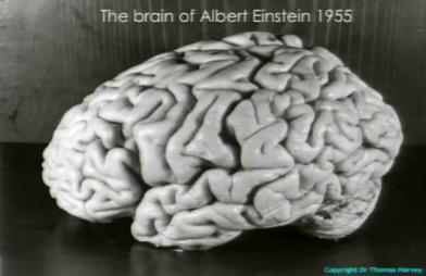12 fakta aneh dan menarik mengenai albert einstein 0