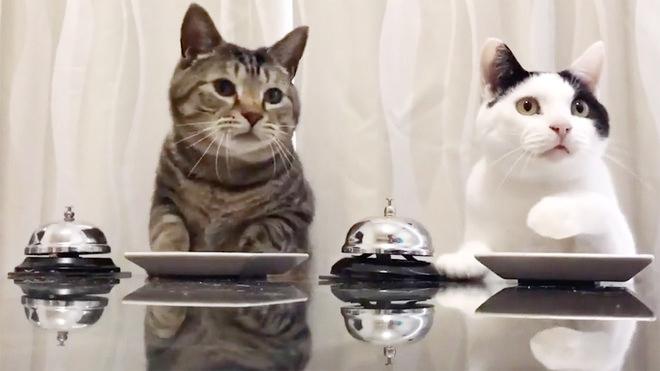 2 ekor kucing tekan loceng untuk memesan makanan