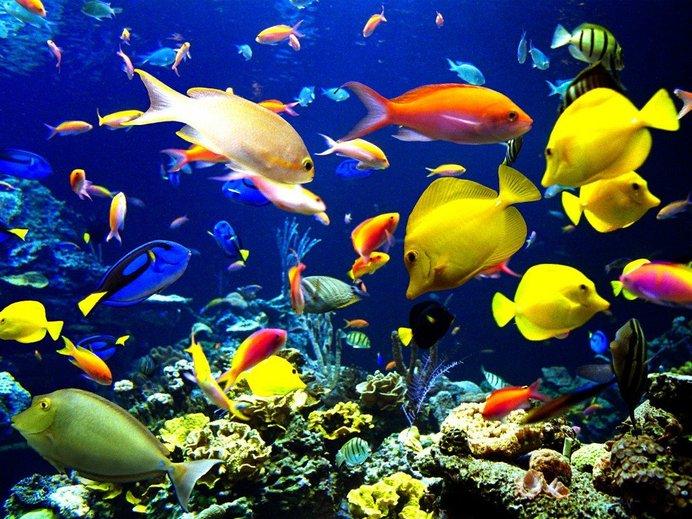 7 Ikan Paling Cantik Di Dunia Iluminasi