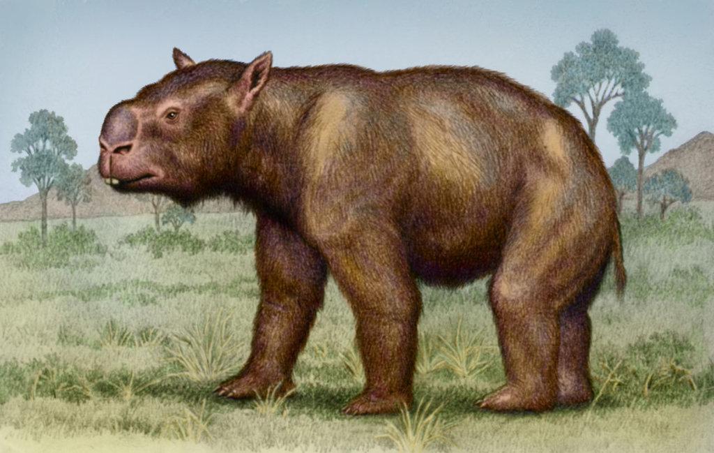 9 fakta menarik mengenai wombat 5