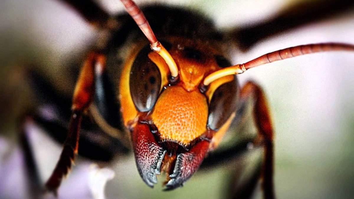 9 serangga paling berbisa dan menakutkan di dunia