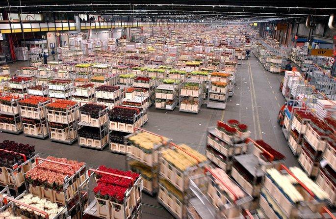aalsmeer flower auction bangunan paling besar di dunia