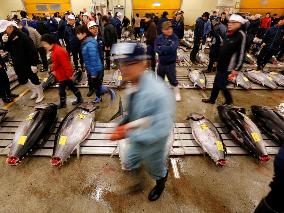 acara lelongan ikan tuna sirip biru paling terkenal di pasar tsukiji