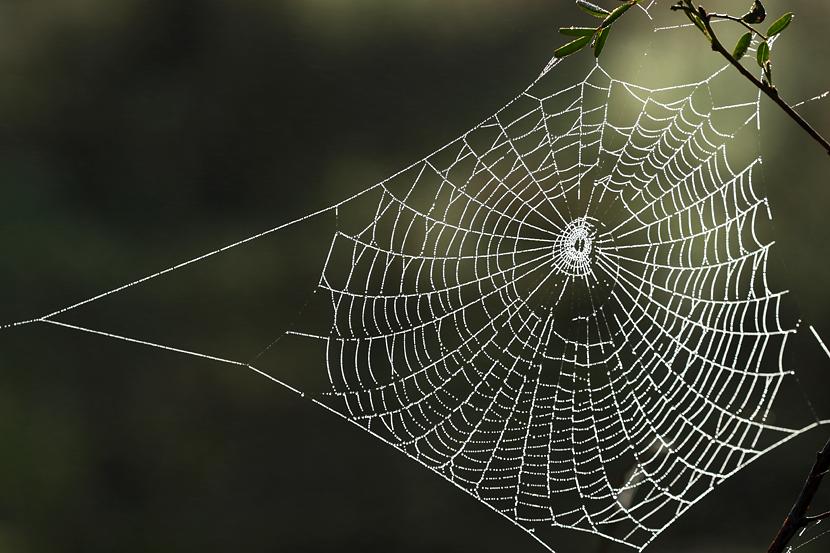 akal labah labah di gua buruk suka merakut senarai peribahasa yang anda tak pernah dengar