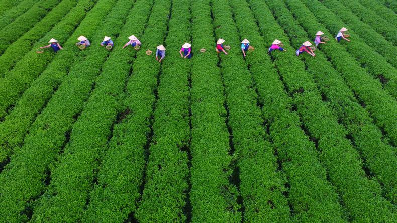 aktiviti pertanian sumber makanan negara padat