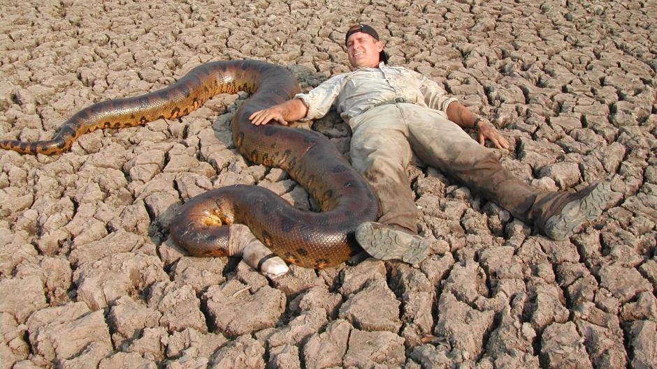 anaconda dewasa lebih besar dari manusia