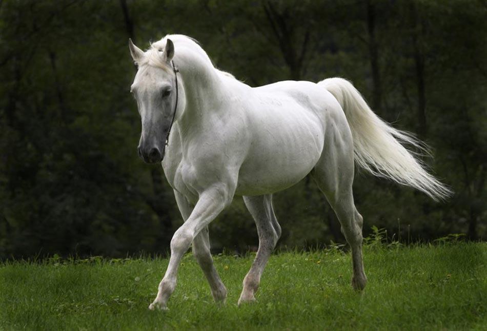 anak kuda bulu kasap senarai peribahasa yang anda tak pernah dengar