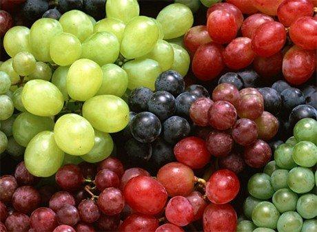 anggur tiruan