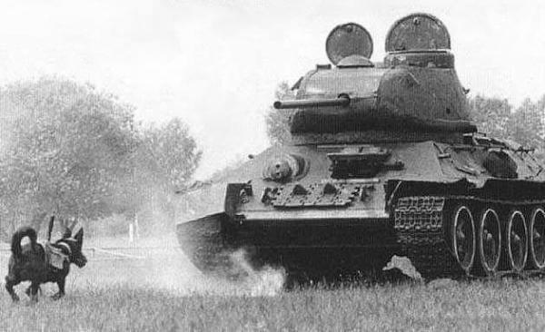 anjing anti kereta kebal soviet senjata paling dahsyat digunakan dalam perang dunia kedua