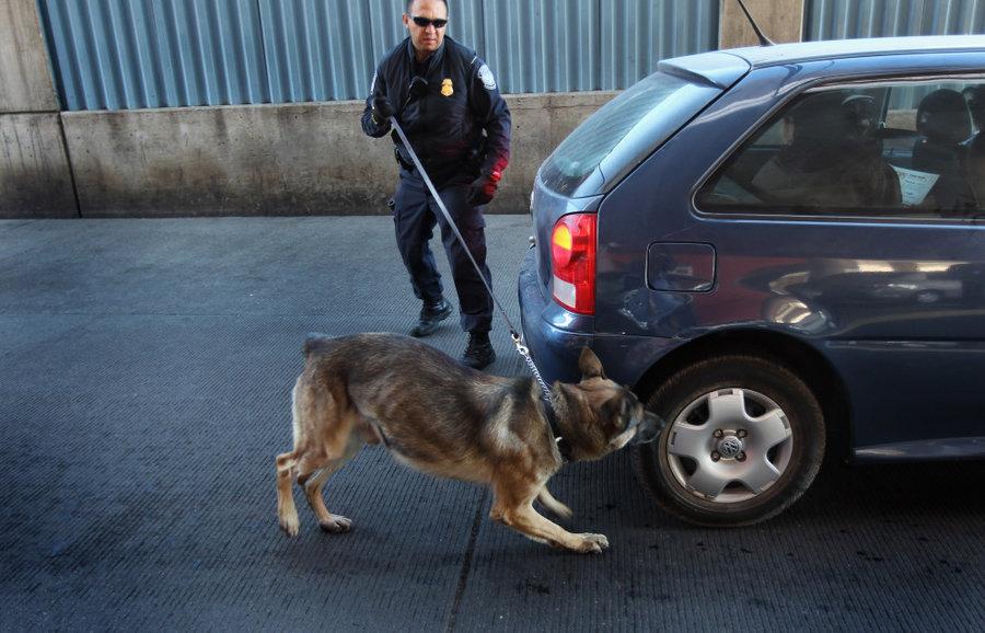 anjing baka german shepherd