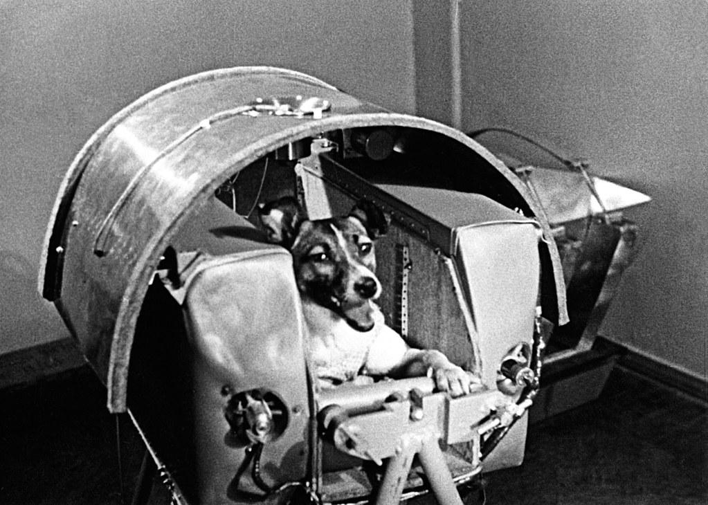 anjing ke angkasa