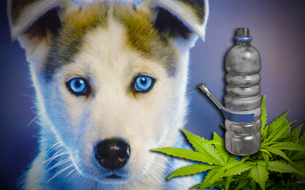 anjing pengesan dadah jenis syabu ganja dan lain lain
