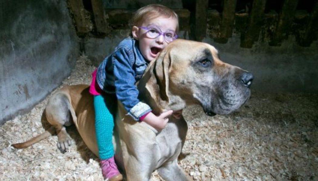 anjing pengesan sawan epilepsi