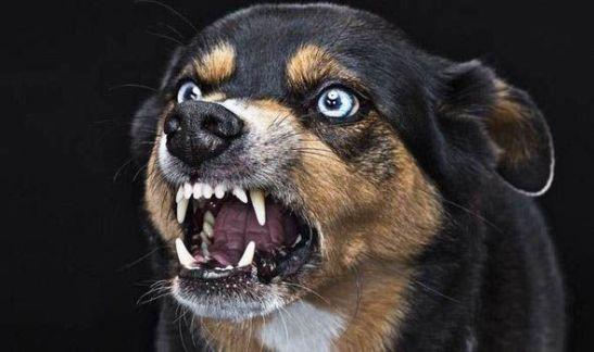 anjing penyebab kematian