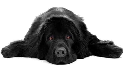 anjing stres dan kemurungan