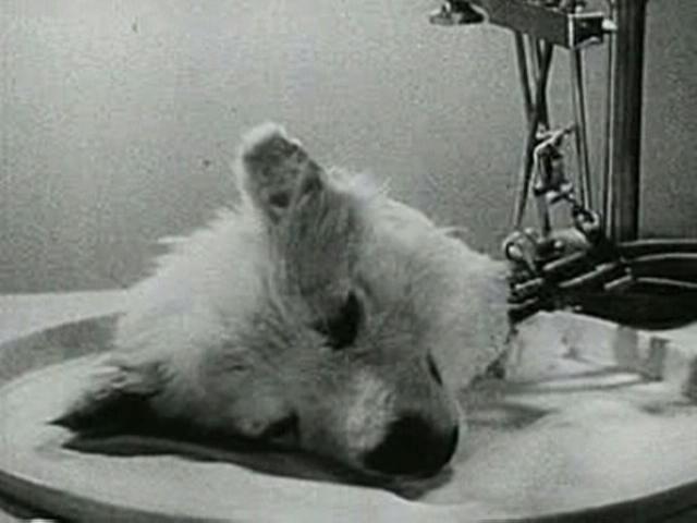 anjing zombie 2 eksperimen sains rusia paling gila pernah dilakukan terhadap anjing
