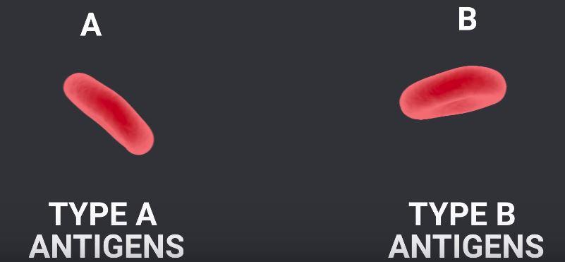 antigen dan jenih darah