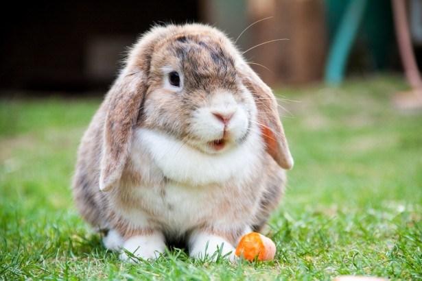 50+ Gambar Binatang Peliharaan Dan Makanannya Terbaru