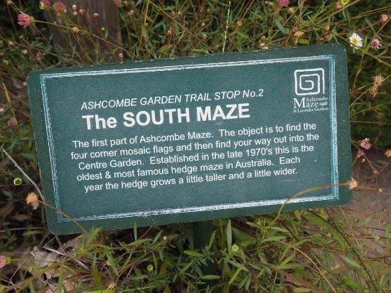 ashcombe maze australia