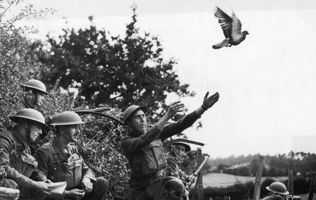 bagaimanakah burung merpati dilatih sebagai agen penghantar mesej