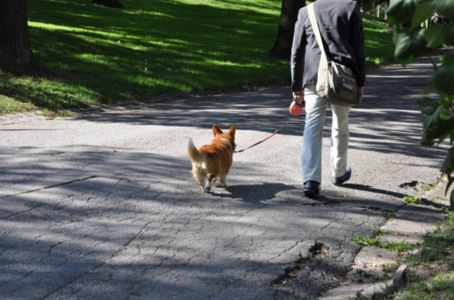 bandar turin di itali mengehadkan anjing untuk dibawa bersiar siar 3 kali sehari