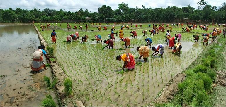 bangladesh 10 negara pengeluar beras terbesar di dunia