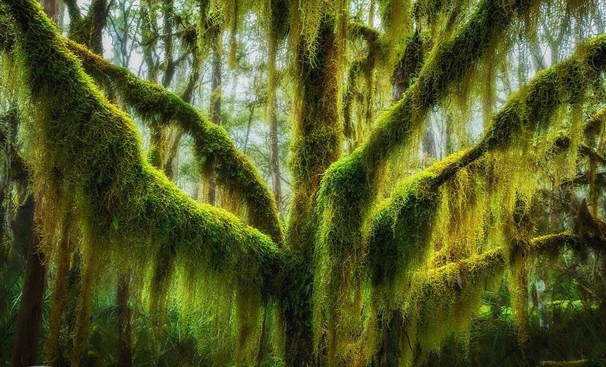 beech tree 409