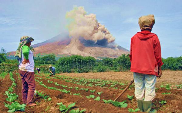 bercucuk tanam berhampiran gunung berapi