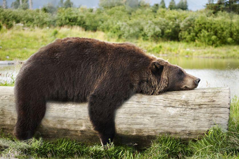 beruang 8 haiwan dengan tabiat tidur yang pelik dan unik