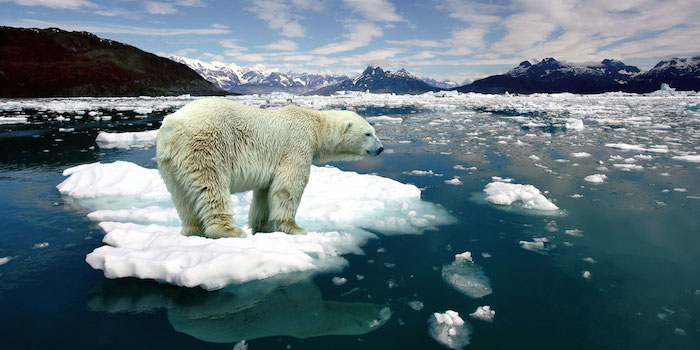 beruang kutub diancam kepupusan