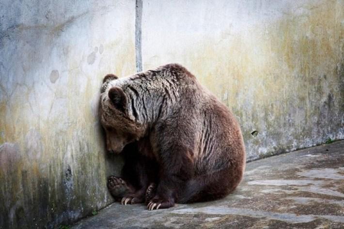 beruang terpinggir