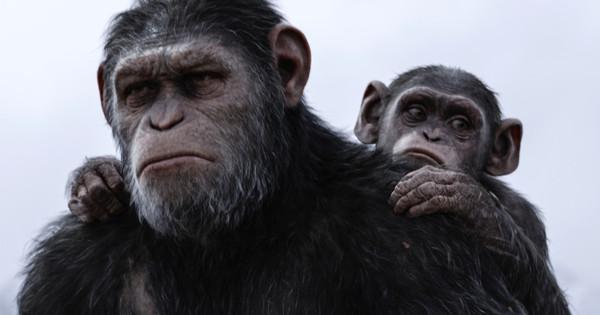 beruk dalam filem planet of the apes