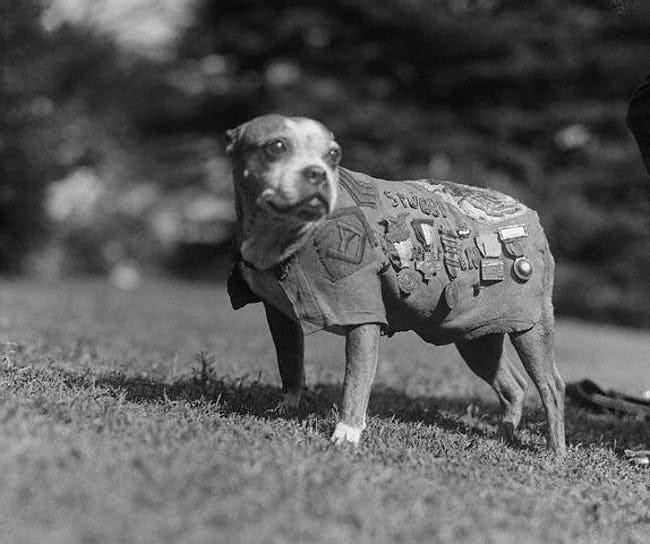 binatang hero semasa peperangan