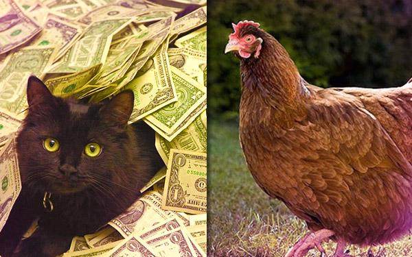 binatang paling kaya sebab dapat wasiat