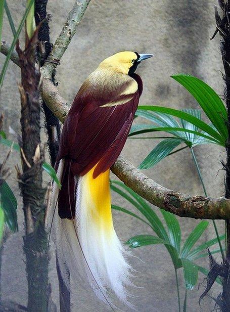 bird of paradise bali 47