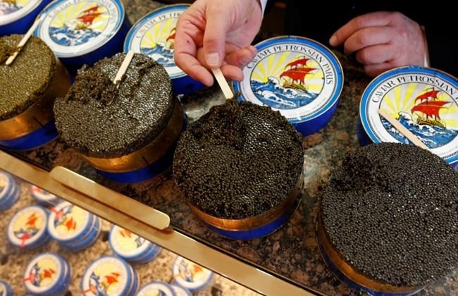 black caviar telur ikan paling mahal