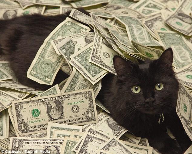blackie haiwan paling kaya di dunia