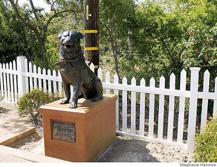bosco the dog menang pilihanraya