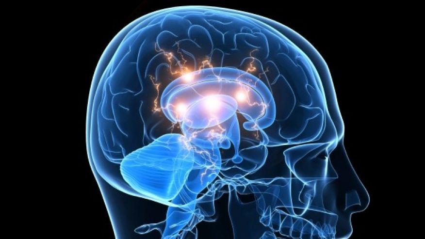brain 964