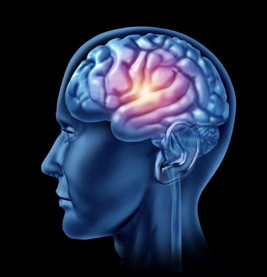 brain illustration 517