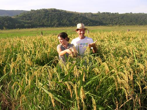 brazil 10 negara pengeluar beras terbesar di dunia