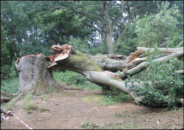 bumi besar pokok tumbang
