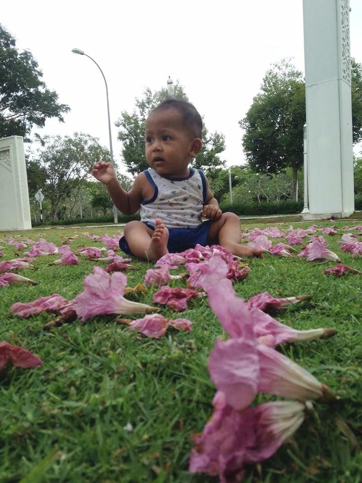 bunga tekoma