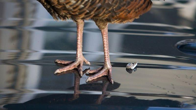burung berak