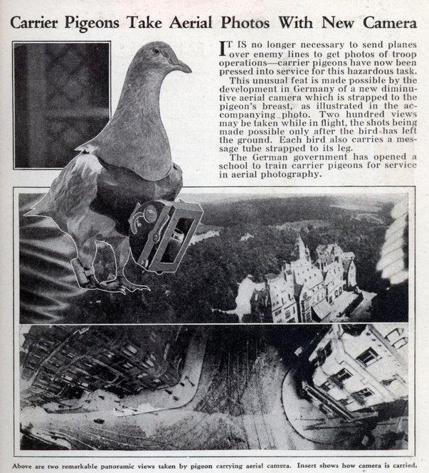 burung merpati ambil gambar