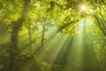 cahaya yang menerangi